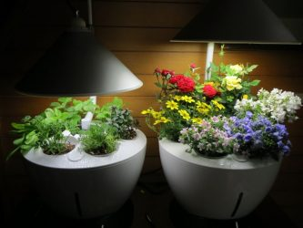 Выращивание растений при искусственном освещении