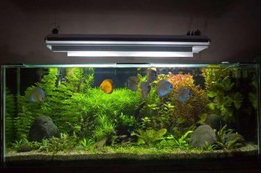 Какое освещение должно быть в аквариуме?